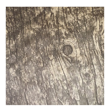 Rustic Birch Wood Sheets 12 X 12 With Adhesive Backing